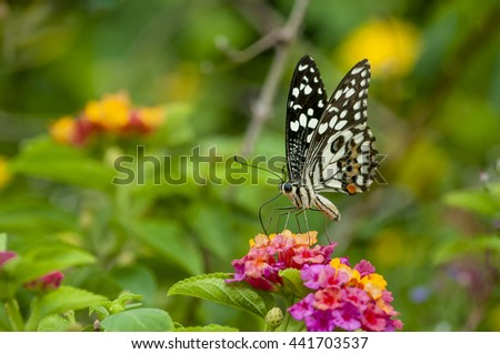 Butterfly perched on a flower worm manat Baan Phakakrong beautifully . - stock photo