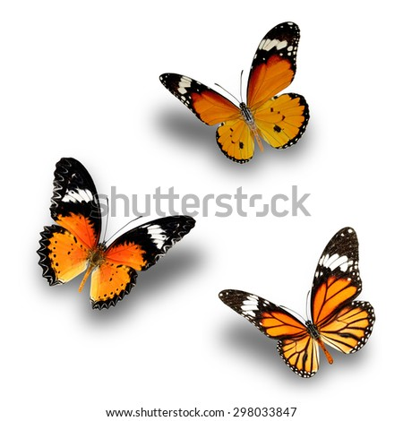 Butterfly, Plain Tiger ,Common Tiger and Leopard Lacewing upper wing profile flying up - stock photo