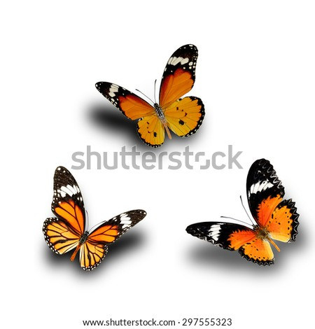 Butterfly, Plain Tiger, Common Tiger, Leopard Lacewing upper wing profile flying up - stock photo