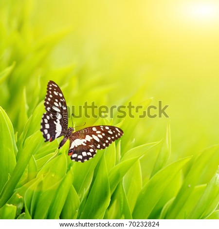 Butterfly sitting on a fresh green grass - stock photo