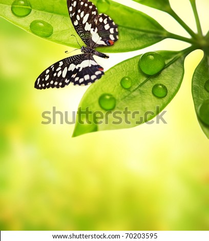 Butterfly sitting on a green leaf - stock photo