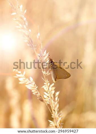 butterfly sitting on the grass - stock photo