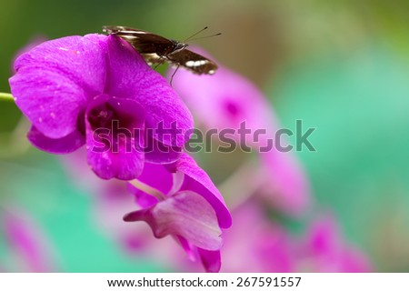 Butterfly standing on vivid pink orchid flower in a tropical garden - stock photo