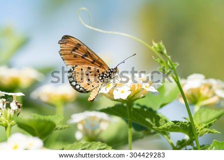 Butterfly sucking nectar from flowers . - stock photo