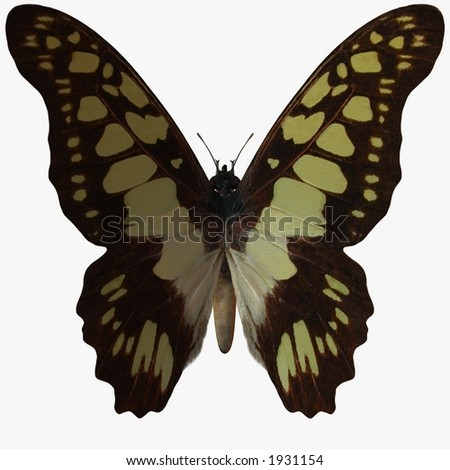 Butterfly-Swallow Tail - stock photo