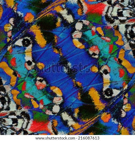 Butterfly wing,Beautiful colorful pattern background texture made from butterfly's wing. - stock photo