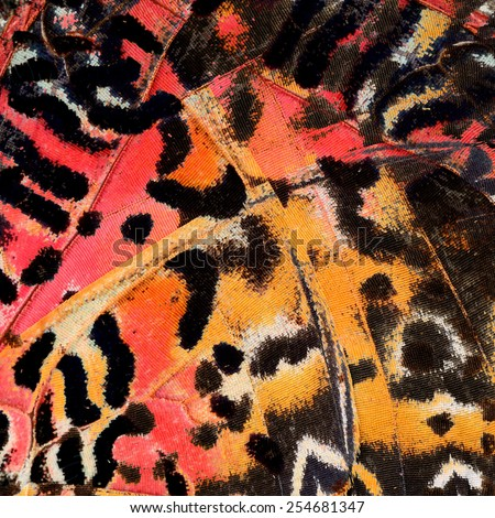 Butterfly wing,beautiful pattern background texture of Leopard Lacewing butterfly wing, Malayan Lacewing butterfly wing.(Cethosia cyane) - stock photo