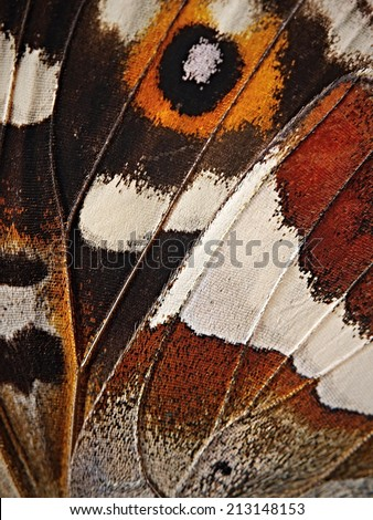Butterfly wing detail - stock photo