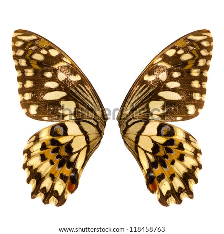 butterfly wing isolated on white - stock photo