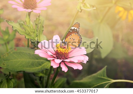 Butterfly with Flower and sunlight  in garden. - stock photo