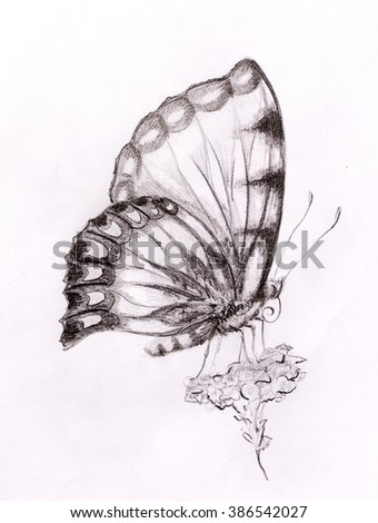 Butterfly with flower. Original hand draw. White background. - stock photo