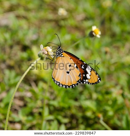 Butterfly with grass flower - stock photo