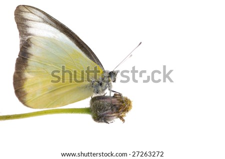 butterfly with yellow flower - stock photo