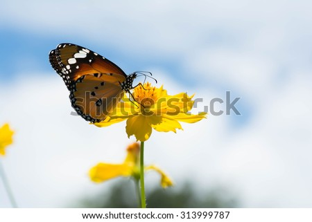 Butterfly with yellow flowers And bright sky - stock photo