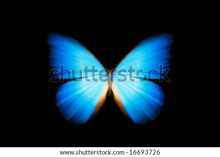 Butterfly zoom - stock photo
