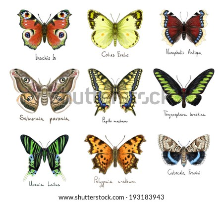 Butterflys set. Watercolor imitation. - stock photo