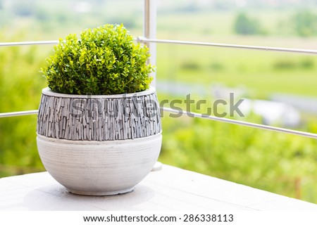 Buxus in modern ceramic flower pot on balcony - stock photo
