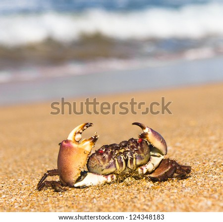 By the Sea Menacing Eyes - stock photo
