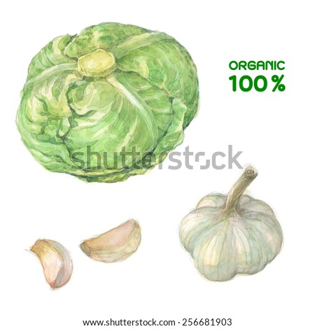 cabbage and garlic  painting watercolor . healthy food, - stock photo