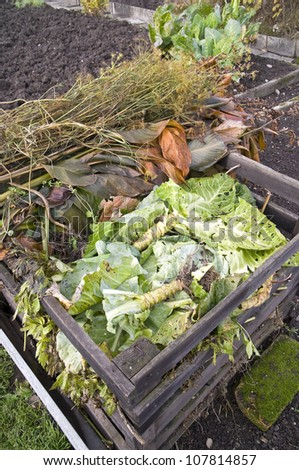 Cabbage leaves and trunks in a compost bin in a vegetable garden - stock photo