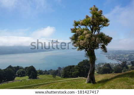 Cabbage tree frames broad landscape of the Otago Peninsula and Bay near the city of Dunedin and clouds hanging over the mountains - stock photo