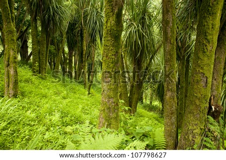 Cabbage Trees in New Zealand section of The Batumi Botanical Garden - stock photo