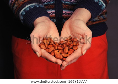 Cacao beans in the woman's hands - stock photo