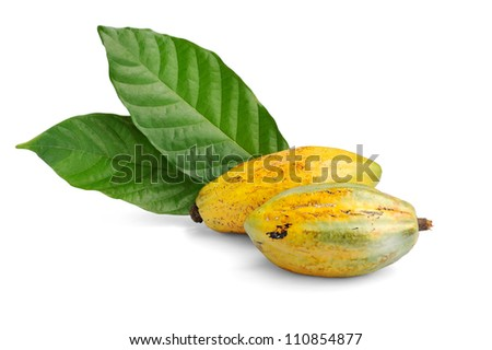 Cacao fruits isolated against white background, selective focus. - stock photo