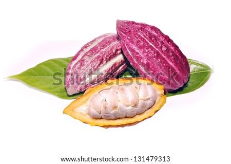 Cacao fruits isolated on white background - stock photo