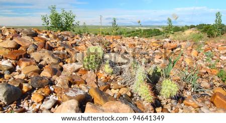 Cacti grow through a rocky landscape at Badlands National Park of South Dakota - stock photo