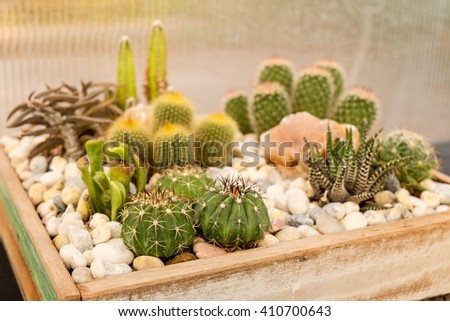 cactus and succulent garden in plate, in the nursery plant. - stock photo