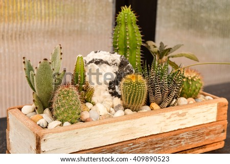 cactus and succulent  garden plate, in the nursery plant. - stock photo
