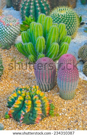 Cactus and succulent garden ,Thailand - stock photo