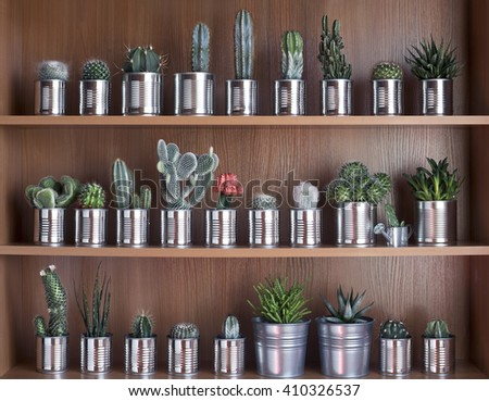 Cactus and succulents on shelf. Recycle aluminum can. Retro filter effect - stock photo