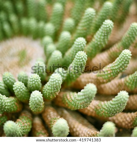 Cactus background with copy space and selective focus. Desert plant in the sunlight, macro shot.  - stock photo