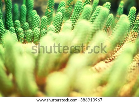 Cactus background with sunlight and selective focus. desert plant with copy space. - stock photo