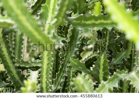 Cactus branches, selective focus, background and texture. - stock photo
