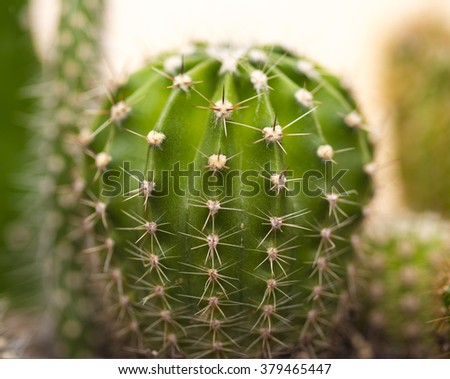 Cactus Close up of globe shaped cactus with long thorns  - stock photo