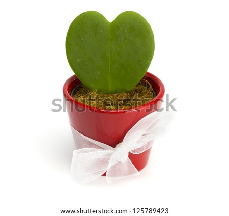 Cactus heart in a red pot on the white isolated background - stock photo