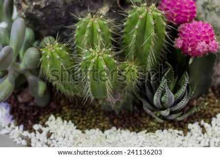 Cactus in a pot - stock photo