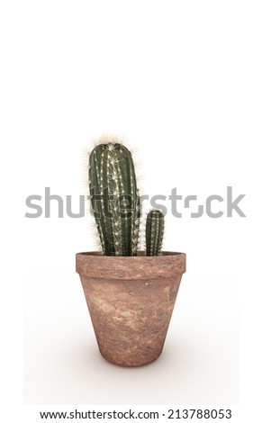 cactus in a pot isolated on white background - stock photo