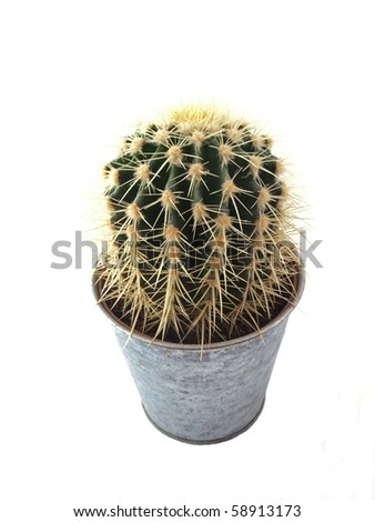 Cactus in a pot on a white background. - stock photo