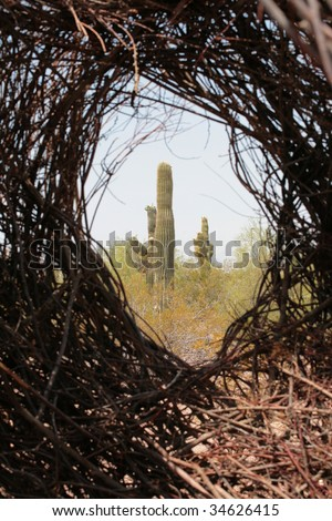 Cactus in Desert through Tumbleweed - stock photo