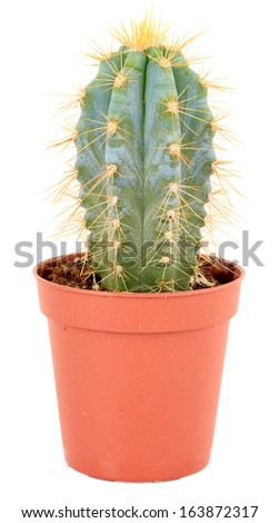 Cactus in flowerpot, isolated on white background - stock photo