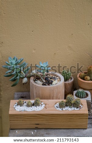 Cactus in flowerpots with flowers - stock photo