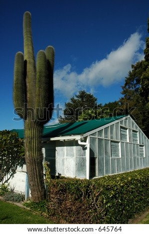 cactus in front of house - stock photo