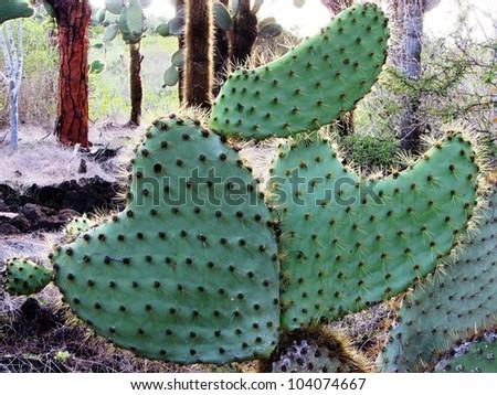 Cactus in Love - stock photo