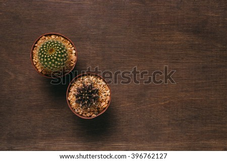 Cactus in the pot on wooden table. - stock photo