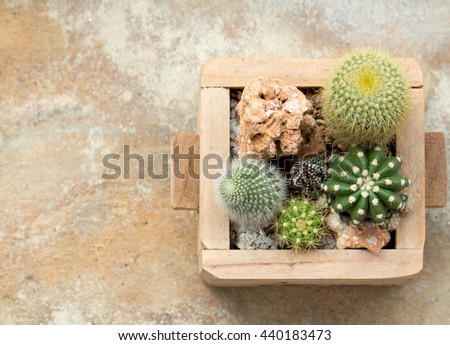 Cactus in wooden pot on cement wall  - stock photo