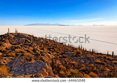 Cactus island in the Salar de Uyuni (Salt Flat), Bolivia - stock photo